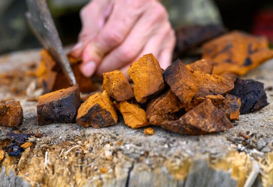 Chaga paddenstoel - Pure Mushrooms - Puur, vegan en bio