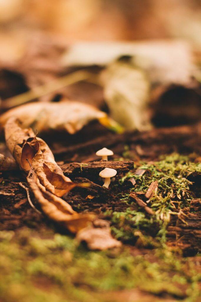 paddenstoelen kweken