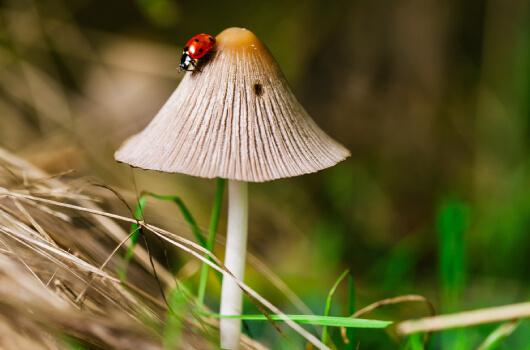 Duurzaamheid Pure Mushrooms - 100% vegan